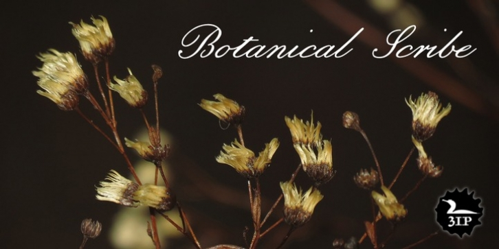 Botanical Scribe font preview